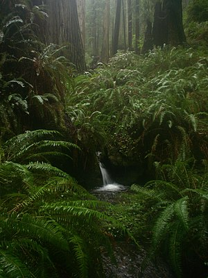 Prairie Creek Redwoods State Park - A small waterfall on the side of Rhododendron Trail