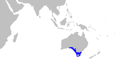 Range of shortnose sawshark (in blue)