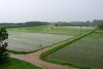 Agricultural fields of Punjab during the monsoon Punjab Monsoon.jpg