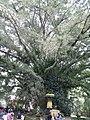 Pura Tirtha Empul - panoramio.jpg