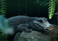 Pygmy Crocodile at Bristol Zoo (17987351179).jpg