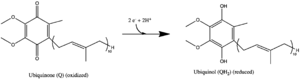 NADH dehydrogenase (ubiquinone) - CoQ to CoQH2.