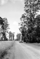 Queensland State Archives 2154 Scene on Memerambi Road with belah timber trees Kingaroy 1945.png