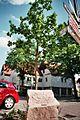 Raalte Oak 2008.jpg