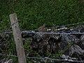 Rabbit On A Wall. - geograph.org.uk - 425806.jpg