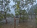 Rain over the mangrove (15810999456).jpg