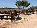Rancho Grande - panoramio - Emanuela Meme Giudic… (4).jpg