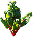 Red chard - Public Domain.jpg