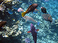 Red sea-reef 3641.jpg