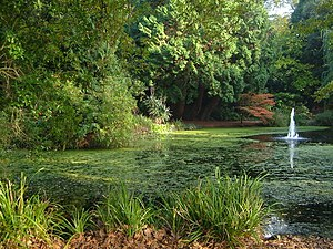 English: Reed Pond, University of Exeter Small...