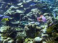 Reef2168 - Flickr - NOAA Photo Library.jpg