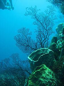 Barriera corallina nei Caraibi - Foto di Lauretta Burke (World Resources Institute) 2007.