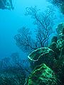 Reef 247.jpg