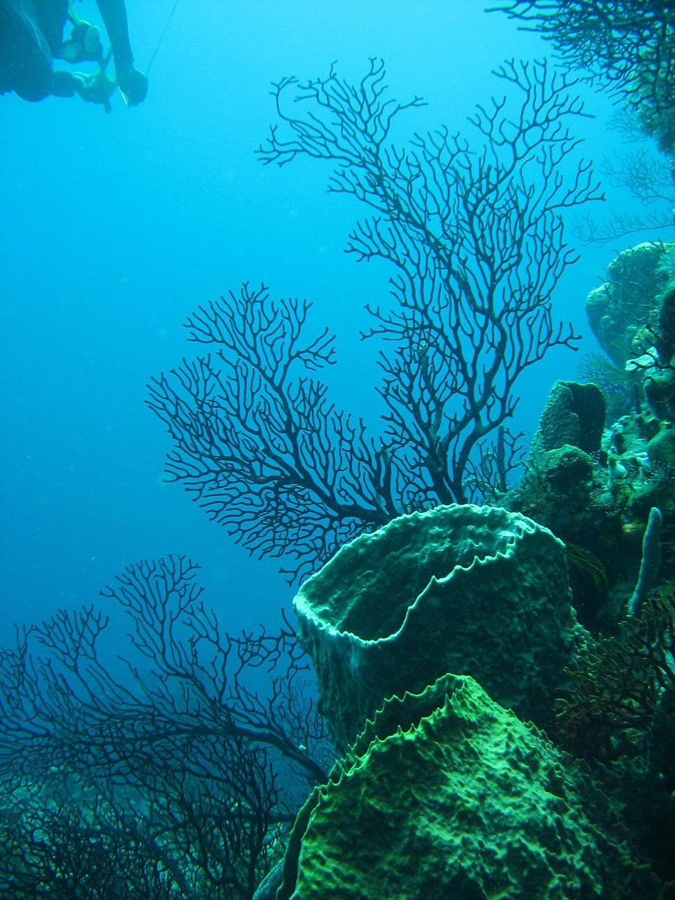 Reef 247