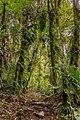 Regenwald In Boquete (155902151).jpeg