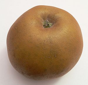 A Canada grise apple