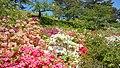 Rhododendron in Noshiro Park 20190519c.jpg