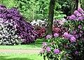 Rhododendronpark Bremen 1.jpg