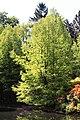 Rhododendronpark Bremen 20090513 093.JPG