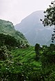 Rice cultivation Nepal Lower Himalayas.jpg
