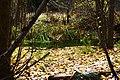 Rio y hojas en otoño - panoramio.jpg