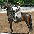 Rock Creek Spring Horse Show 2008 (2673756705).jpg