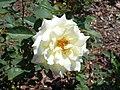 Rosa Polarstern 2018-07-10 5437.jpg