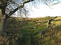 Rough grazing near Winnowshill Farm - geograph.org.uk - 282245.jpg