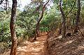 Roussillon Vaucluse sentier des ocres 2013 10.jpg