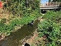 Ruisseau Merdasson - Marcigny - 2020-08-15 - 6.jpg
