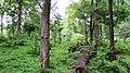 Safari @ Anamalai Tiger Reserve - panoramio (3).jpg