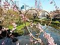 Sakura in Mori Teien.jpg