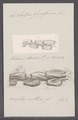 Salpa fusiformis - - Print - Iconographia Zoologica - Special Collections University of Amsterdam - UBAINV0274 092 08 0026.tif