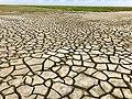 Salzwiesen bei Keitum auf Sylt im Weltnaturerbe 02.jpg