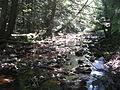 Sand Spring Run in Hickory Run State Park.jpg