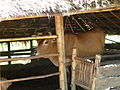 Sanitary livestock pen, Can Loc, Thanh Hoa, Vietnam 2010. Photo- AusAID (10720009293).jpg