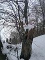 Savadisla, Romania - panoramio (1).jpg