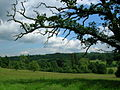 Scotney Castle estate.jpg