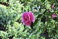 Seattle - Parsons Gardens 17.jpg