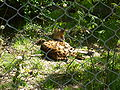 Serval Buffalo Zoo.jpg