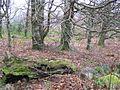 Seskinore Forest - geograph.org.uk - 1097359.jpg