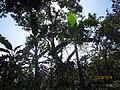 Shade Trees.JPG
