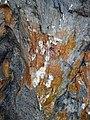 Shatterconed sandstone (Mississagi Formation, Paleoproterozoic, ~2.3-2.4 Ga; Ramsey Lake Road outcrop, Sudbury, Ontario, Canada) 111 (47768113371).jpg