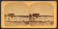 Sheep Ranch near the Pinto River, Texas, from Robert N. Dennis collection of stereoscopic views.png
