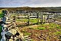 Sheepfold, Surrender Ground - geograph.org.uk - 838934.jpg