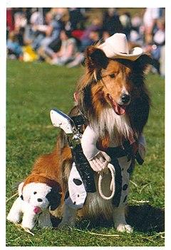 Halloween costume wikipedia cowboy sheltie barks paws up partner solutioingenieria Images