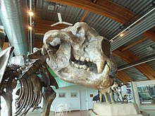 Short-faced bear (6000443459).jpg