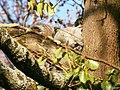 Shy Squirrel (enhanced).jpg