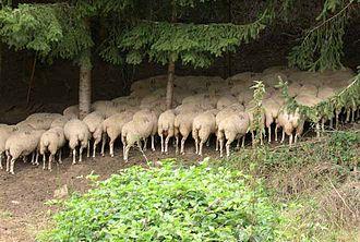 Irati Forest - Image: Siestaborrego