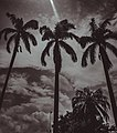 Silhouettes of palm trees in Lagos.jpg